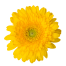Flower-yellow1