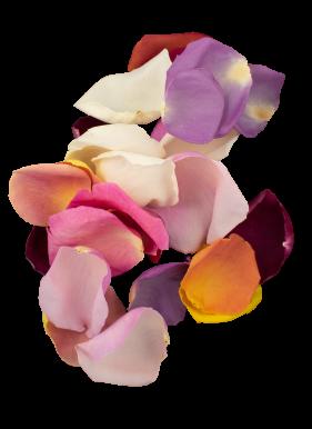 Petal-mixedroses