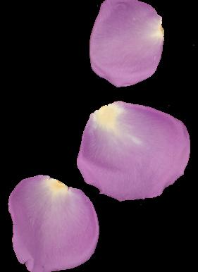 Petal-purple2